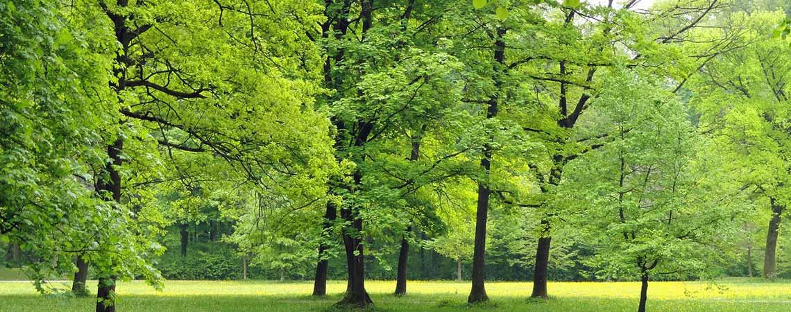 Trees Slider