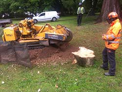 Stump Cutter